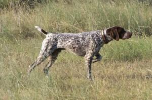 perro cazador 2